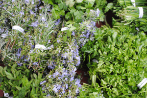 herbs for your eyes
