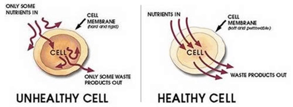 msm healthy cell