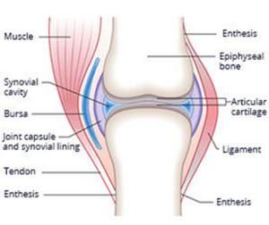 Repairing Cartilage