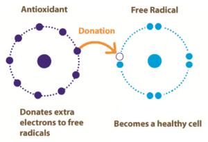 antioxidants free radical