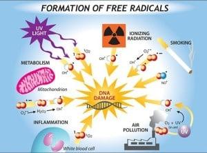 formation free radicals