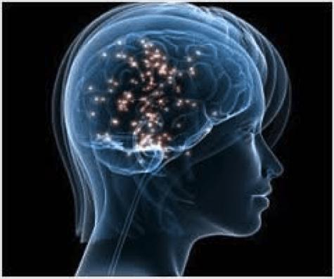 serotonin and your brain