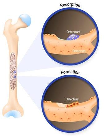 progesterone cream strong bones