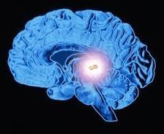 how melatonin affects your brain