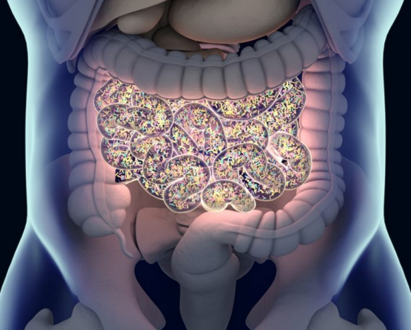 intestinal tune up